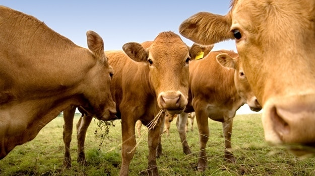 TIA supports new diagnostic technology to rapidly detect foot and mouth disease